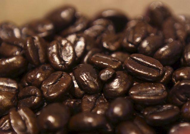 科学家:气候变暖或导致人们无咖啡可喝