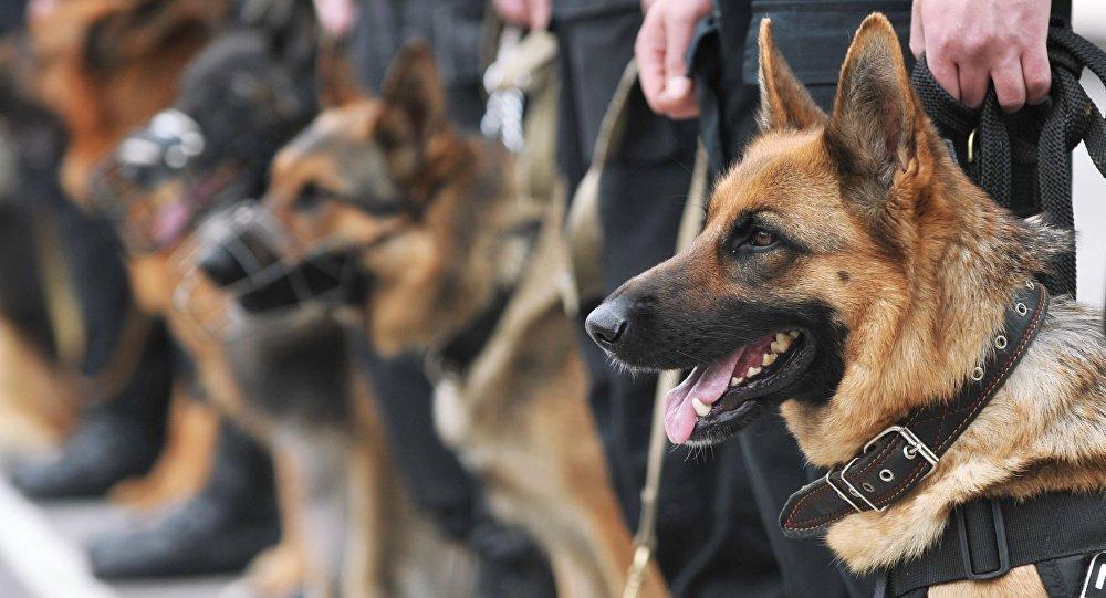 Служебные собаки МВД России