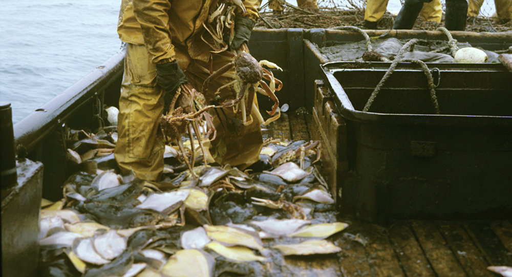 外国公司在俄捕鱼受限 但加工有优惠
