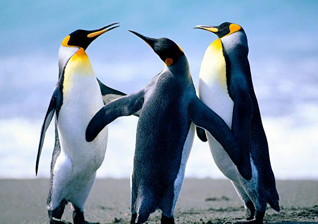 """拉脱维亚南极科考队被鸟""""洗劫"""""""