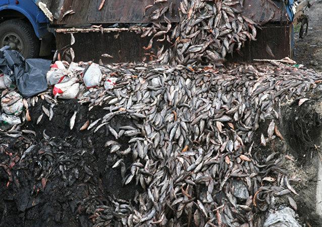 台湾公司承认造成越南70吨鱼类死亡
