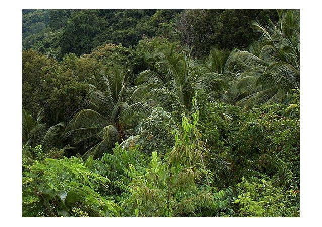 越南一家人连续40余年在热带丛林中躲避美国炸弹