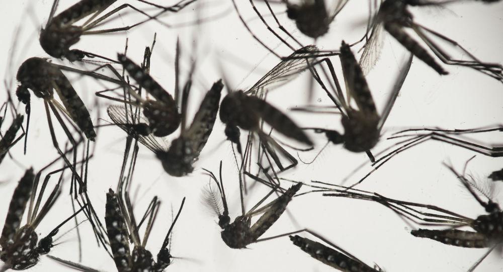 细菌帮助人类驱蚊