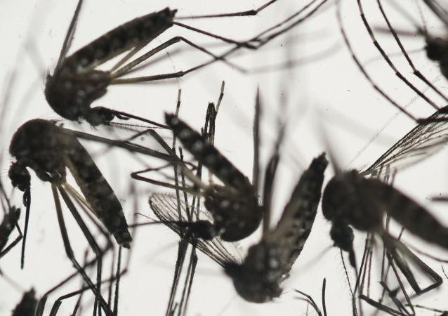 媒体:美国佛罗里达州发现首批寨卡病毒传播病例