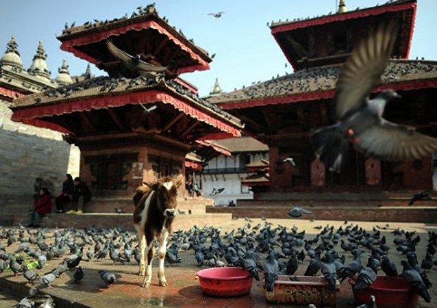 尼泊尔执政联盟失去议会多数支持