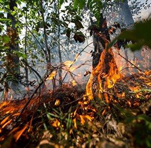 俄西伯利亞森林火災面積約為1500公頃