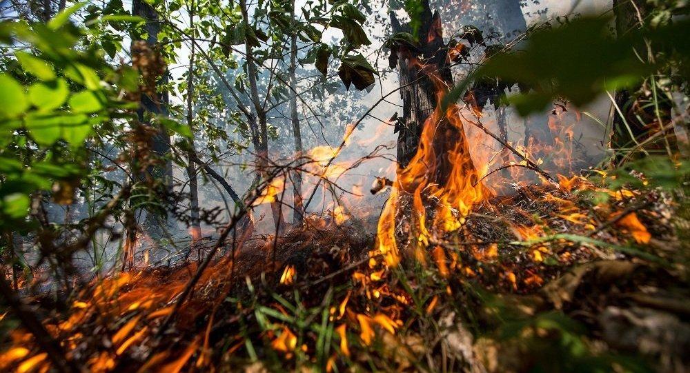 俄罗斯紧急情况部: 发现超过25处火源面积2千多公顷