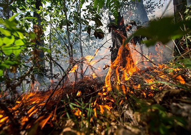远东森林大火面积一昼夜突增5倍