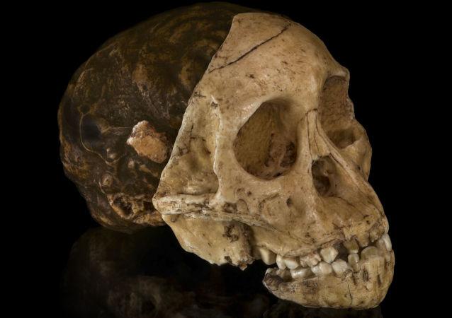 考古学家在华南发现了一个1.6万年前头骨化石