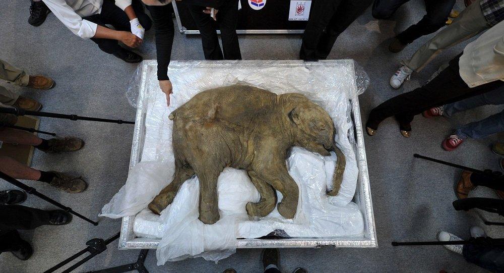 相关的: 俄罗斯建立灭绝动物克隆实验室 关键词  追踪 不追踪社区