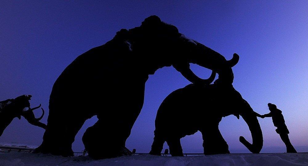 中国公民企图从俄罗斯运出240片猛犸象牙碎片