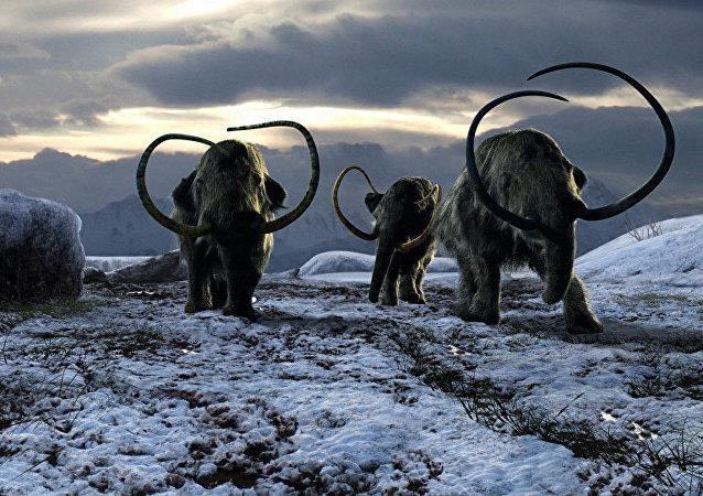 西伯利亚管道工挖出猛犸象遗骸