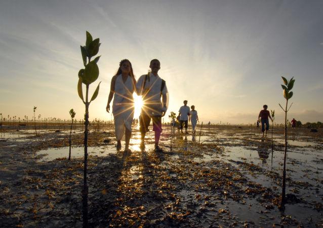 菲律宾新法律:种10棵树才让毕业