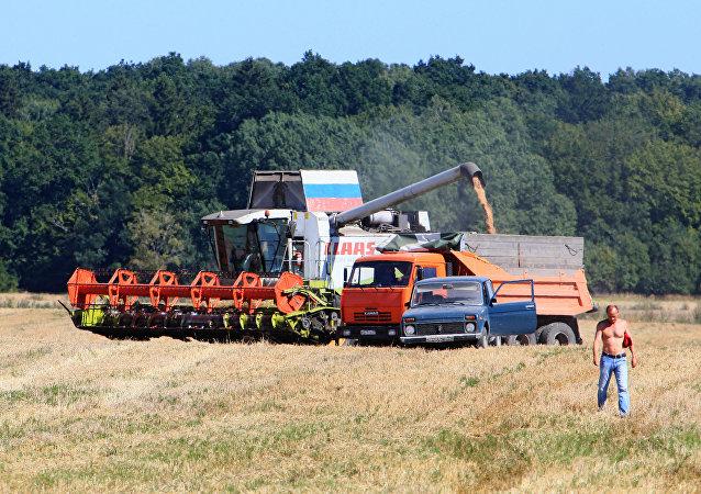媒体: 俄农业部决定取消小麦税