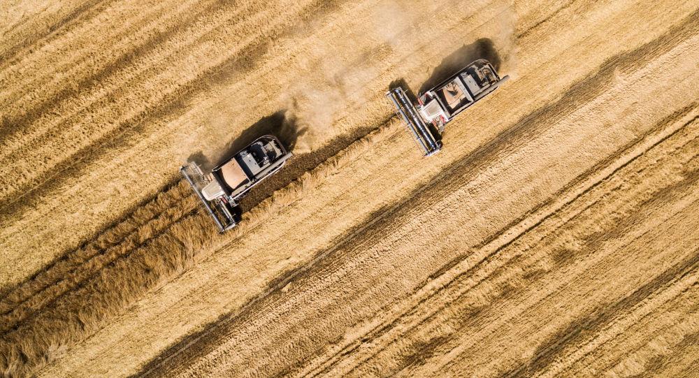 俄铁8月谷物总装运量和出口装运量创新高