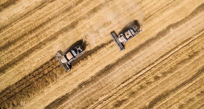 俄農業部長:俄羅斯或將完全取消小麥出口關稅