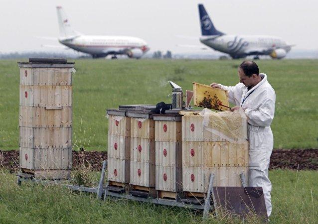 蜂箱在捷克机场