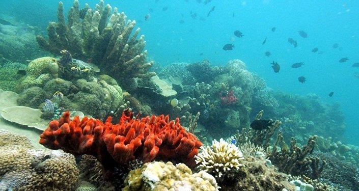 俄遠東科學家建造出用於統計海洋生物資源的水下機器人