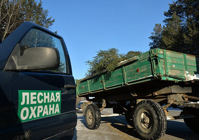 媒体:俄罗斯林务员可等同于警察
