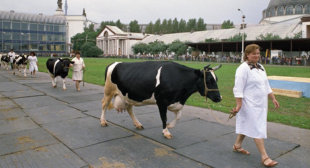 中国与俄滨海边疆区企业将联合成立俄最大畜牧业综合体
