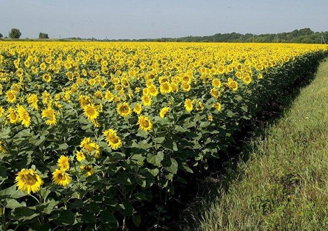 满洲里口岸首次进口俄罗斯葵花籽原油和大豆原油