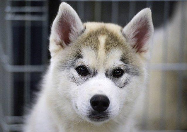 科学家证实狗可以听懂人话