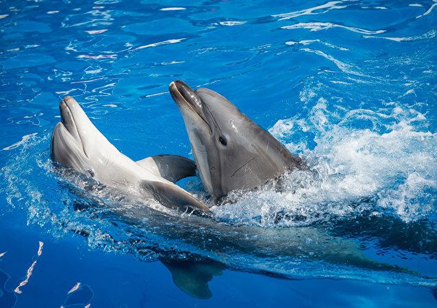 海豚被发现具备完全的语言能力