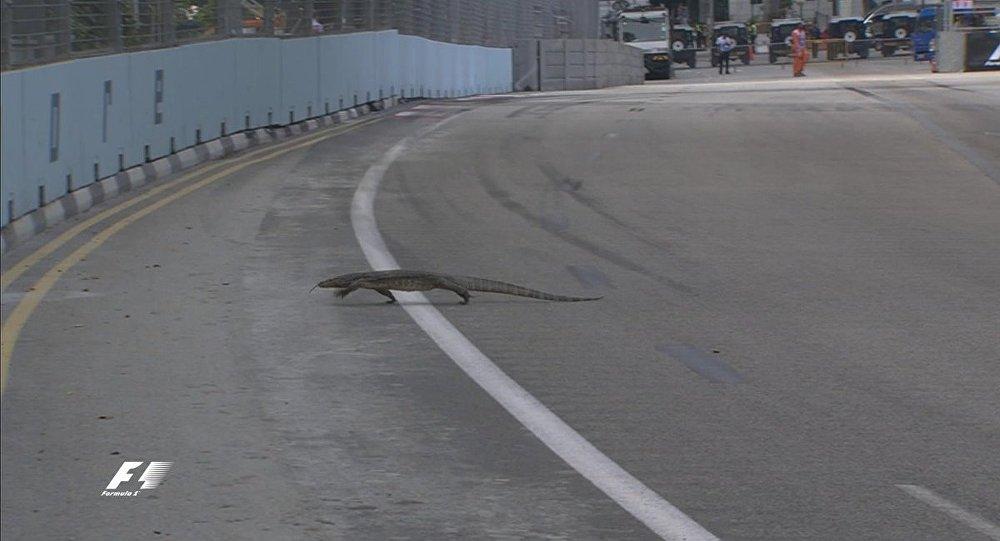 新加坡F1赛道上现巨蜥