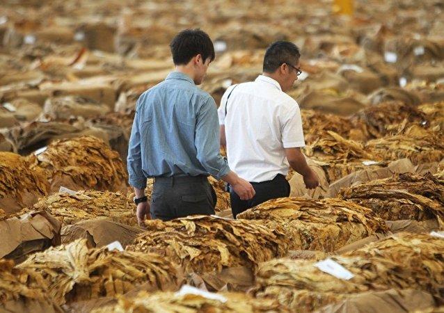 中国正强化对世界烟草市场的控制