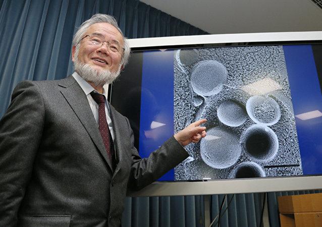 研究细胞自噬机制的日本科学家获诺贝尔医学奖