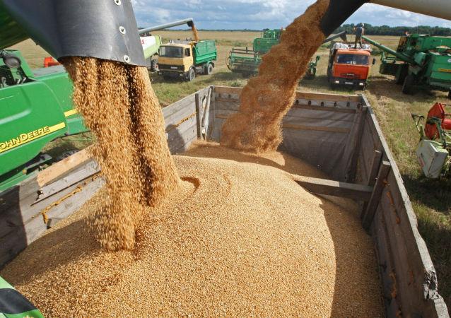 俄农业部:俄2017至2018农业年可以出口5000万吨的谷物