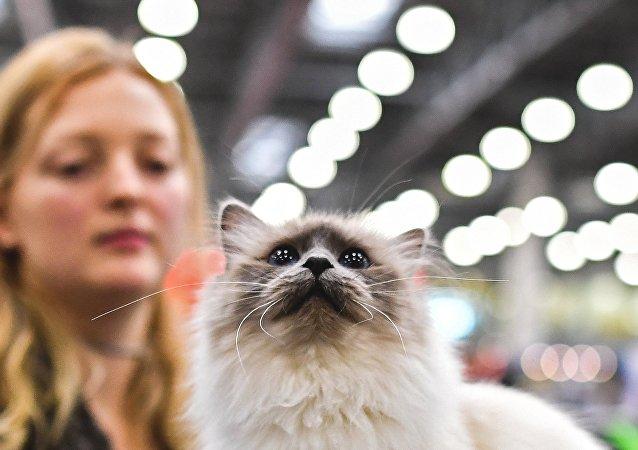彼尔姆的一只捐助猫救活八只同伴/资料图片/