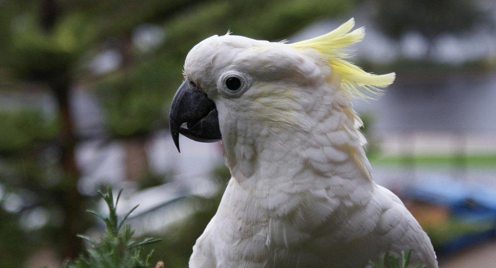 美国一名罪犯在被允许带着他的宠物鹦鹉一起进行拘留拍照