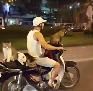 越南摩托车主带四只猫兜风