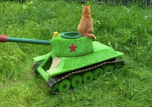 新西伯利亚工程师为猫咪打造坦克房
