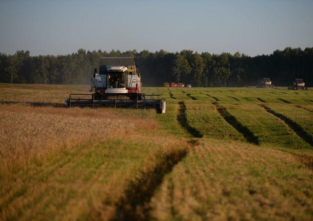 中国农业部: 中俄应帮助对方的绿色农产品进入本国市场