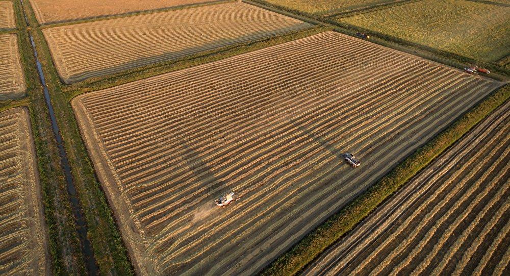 中国副外长:中俄双方在农业领域合作潜力巨大