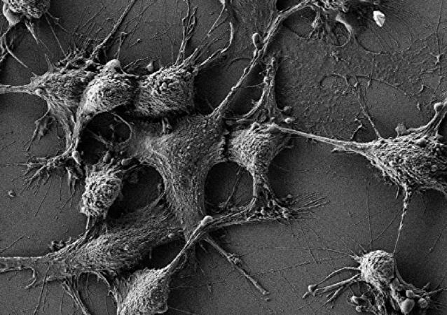 老鼠含二氧化铈纳米粒子的细胞