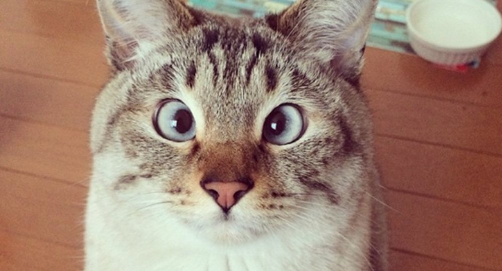 日本一只猫因为救人成为警察头子
