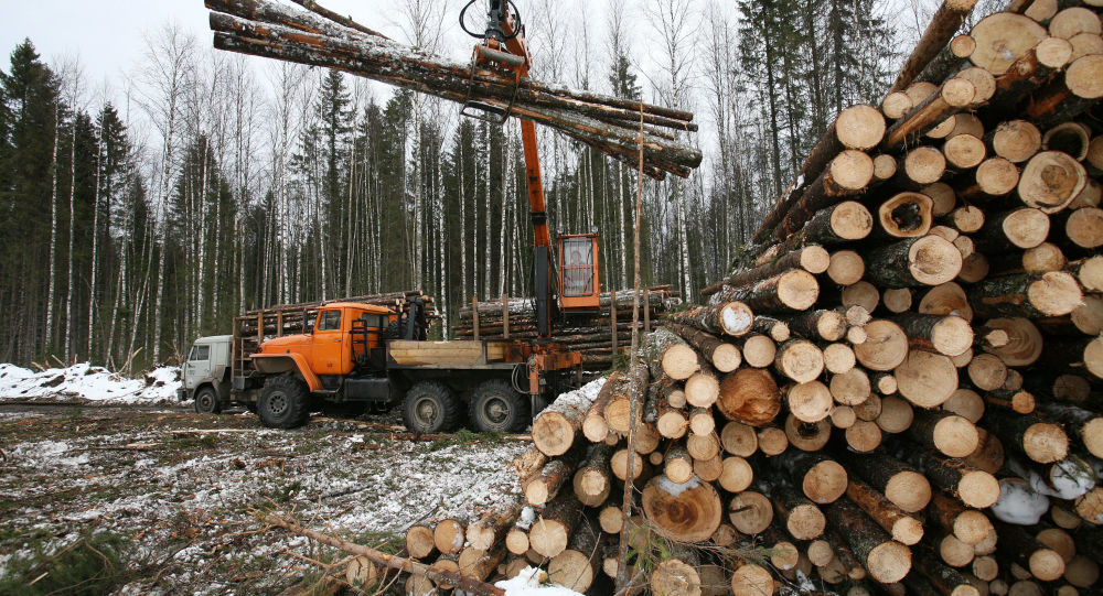 满洲里口岸单日俄木材进口量打破历史记录