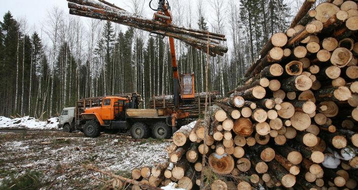 绥芬河铁路口岸前三季度进口俄木材近500万吨