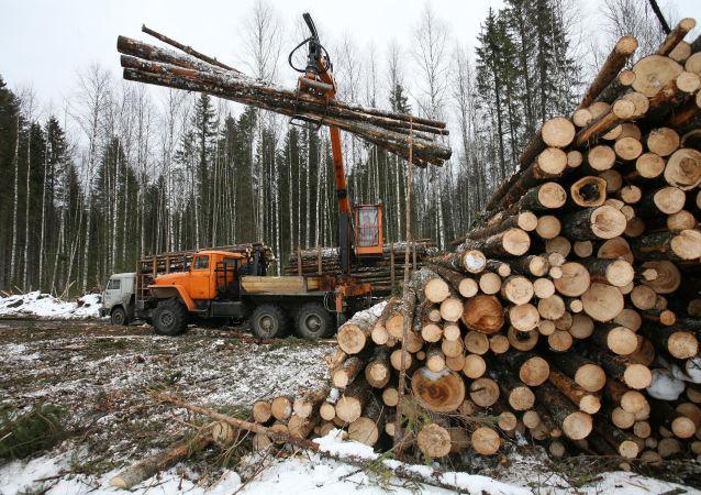 俄工贸部:12月起将对俄远东出口的未加工木材实施配额制