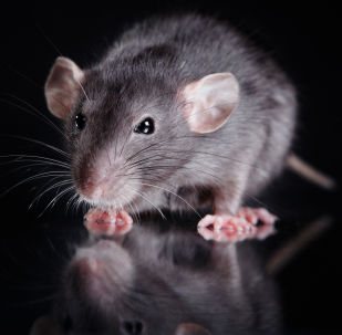 老鼠套做法大全图解