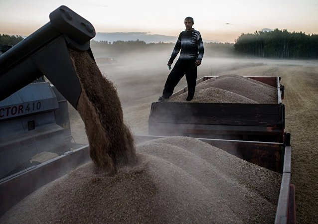 专家:俄2017年或将收获1亿吨以上谷物