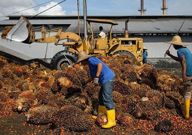 多家国际巨型企业涉嫌从使用童工的种植园购买棕榈油原料