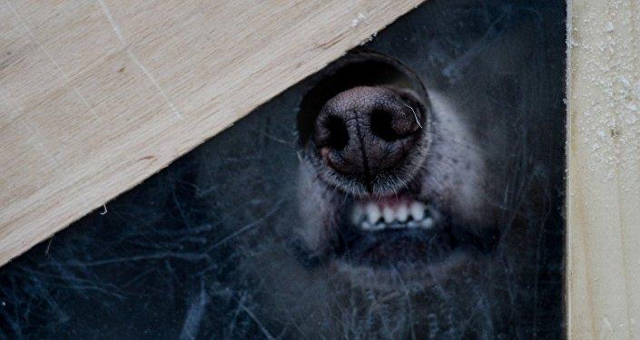 可怜的狗狗:网上又现视觉错觉图