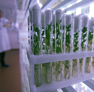 俄中科學家將共同開展育種研究