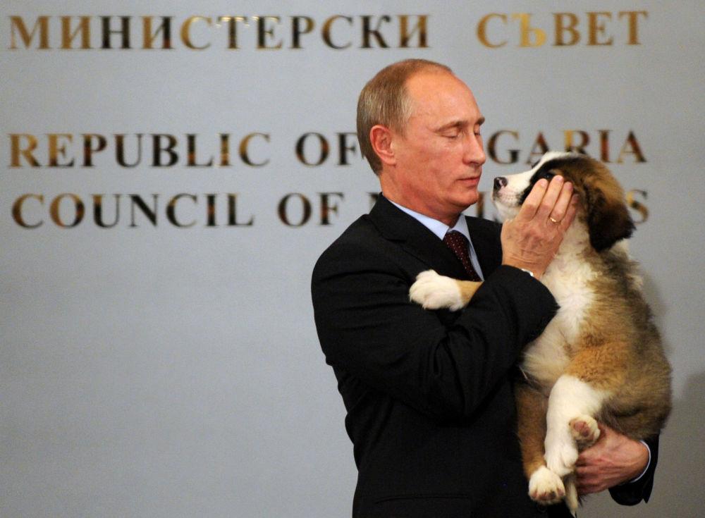 普京的保加利亚牧羊犬为保加利亚总理博伊科•鲍里索夫所赠。