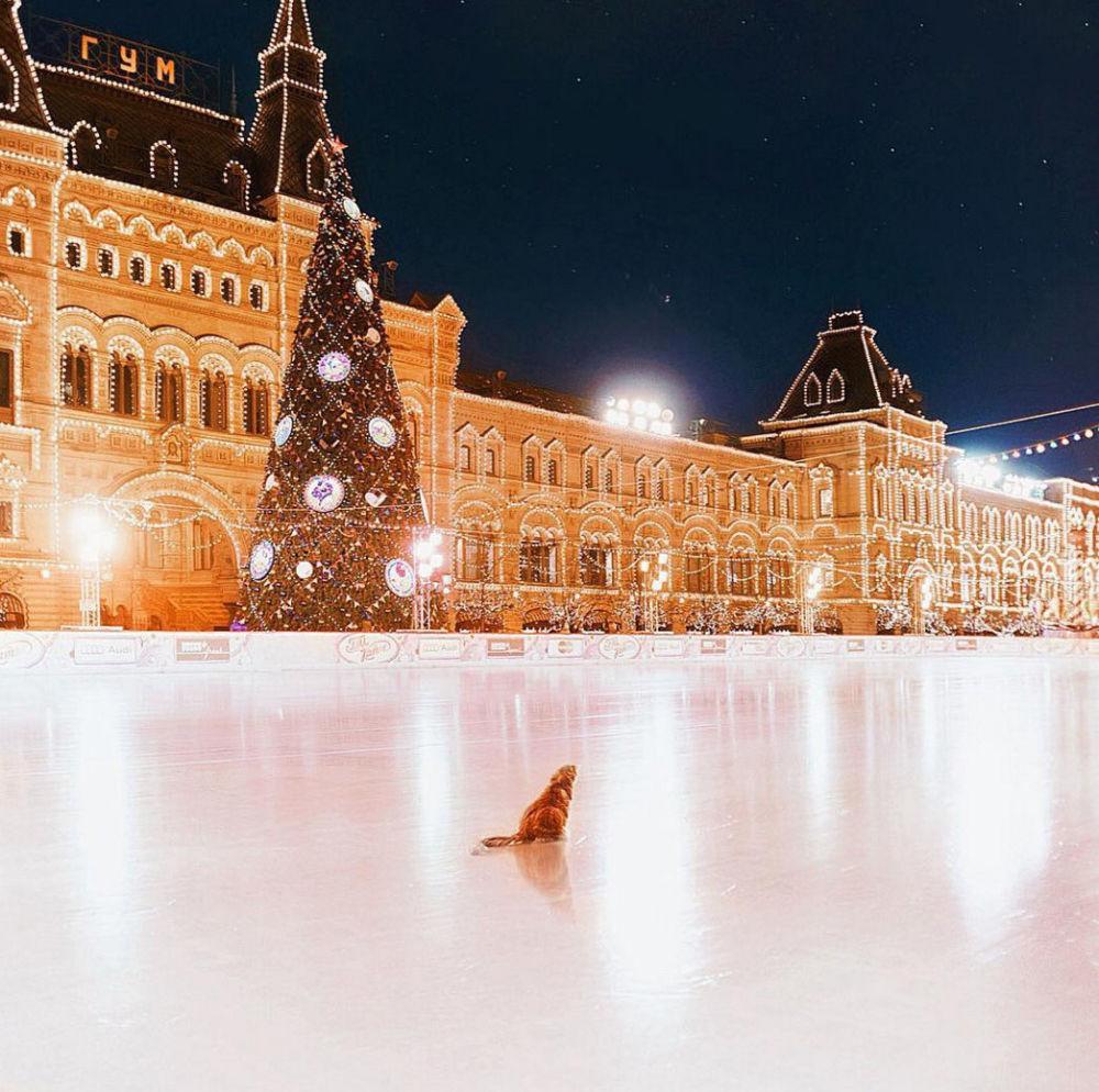 摄影师的猫在溜冰场上,莫斯科红场