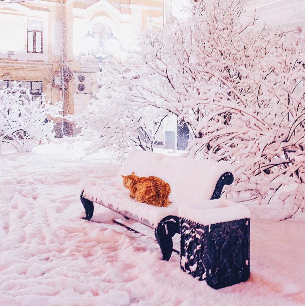 摄影师的猫在被白雪覆盖的长椅上